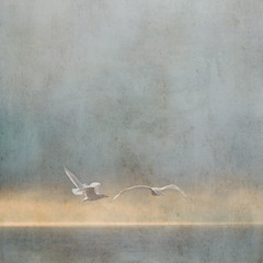 Floating (sally banfill) Tags: seagulls atmospheric coastalphotography sallybanfill pugetsoundphotography