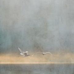 Floating (sally banfill) Tags: seagulls atmospheric coastalphotography sallybanfill pugetsoundphotography