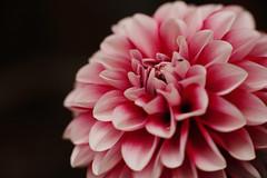 20160422_0025 (teufelkamera) Tags: flower macro tube extention kenko