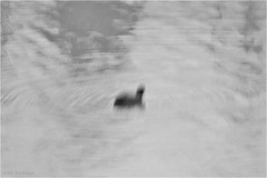 Nessie (Jos Santiago [Fotografia Creativa]) Tags: lago monocromo moving agua nikon bn alemania nessie virado d90 ludwigshafenamrhein fotografiacreativa josesantiago josansaru
