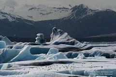 shs_n8_018646 (Stefnisson) Tags: bird ice berg birds landscape iceland glacier iceberg gletscher fugl glaciar sland icebergs jokulsarlon breen jkulsrln ghiacciaio jaki vatnajkull jkull jakar s gletsjer fuglar ln  glacir sjaki sjakar stefnisson
