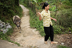 Woman and water buffalo in a Tay village near H Giang - Vietnam (PascalBo) Tags: people woman outdoors buffalo nikon asia southeastasia vietnamese outdoor femme vietnam asie hilltribe buffle d300 vitnam vitnam hagiang ethnie ethnicgroup asiedusudest hgiang pascalboegli