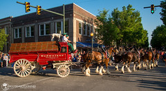 Budweiser Clydesdales | New Bern, NC (Zach Frailey (Uprooted Photographer)) Tags: budweiser clydesdales newbern