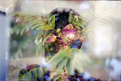 film swap (La fille renne) Tags: flowers woman film silhouette analog 35mm kodak doubleexposure multipleexposure expired mx expiredfilm kodakgold200 topconrm300 lised 55mmf17 lafillerenne liseddeaudouce