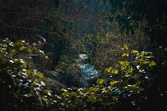 Ruscello (Marco Demuru) Tags: panorama verde nature foglie alberi river landscape blu fiume corso natura vista brook acqua ruscello azzurro corsodacqua
