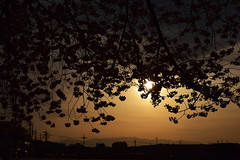 20160406_059_2 () Tags: silhouette