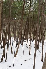 Wooded (juliafrenchfrey) Tags: statepark park trees ny newyork tree nature woods parks gorge ithaca 315 fingerlakes taughannock taughannockfalls ithacany tompkinscounty taughannockstatepark fingerlakesregion taughannockfallsstatepark newyorkstatepark