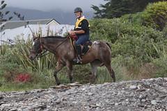 IMG_EOS 7D Mark II201604039659 (David F-I) Tags: horse equestrian horseback horseriding trailriding trailride ctr tehapua watrc wellingtonareatrailridingclub competitivetrailriding sporthorse equestriansport competitivetrailride april2016 tehapua2016 tehapuaapril2016 watrctehapuaapril2016