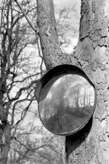 Mirror, Mirror on the tree ... (Man with Red Eyes) Tags: reflection tree slr monochrome analog landscape mirror countryside blackwhite kodak trix round lookingback nikonf6 f6 silverhalide nikkor105mmf25 circlr v850 td201 74degrees anchelltroop a3minb3min continuousagitation