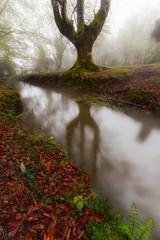 Reflejos II (Alfredo.Ruiz) Tags: tree green grass leaves fog forest river spain foggy beech moos