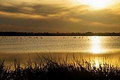 Liquid Bronze (giovannispina31) Tags: sunset italy heron clouds tramonto nuvole saline sera cervia aironi saltpains