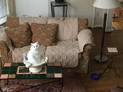 Pearl in her bowl (new spot) (Philosopher Queen) Tags: chat kitty bowl gato pearl whitecat