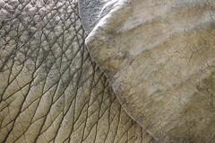 Elephant closeup (fritman99) Tags: africa elephant nature animal animals zoo skin wildlife maryland baltimore wrinkles captivity marylandzoo