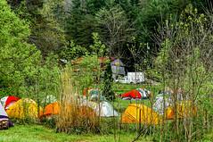 Miguel_Tents2_50%_DSC9529 (kcadpchair) Tags: camping mountains nature outdoors hiking kentucky streams wildflowers appalachia creeks waterplants redrivergorge rockshapes danielboonenationalforest