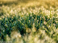 Day 118/366 (Tewmom) Tags: plant field grass landscape outdoor depthoffield serene day118366 beyondbokeh 366the2016edition 3662016 27apr16