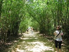 IMG_0985 (Senoritatookyta) Tags: park santa green de tunnel bamboo cruz tenerife grn teneriffa bambus
