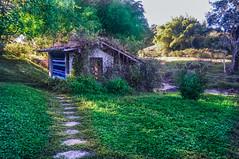 rustic bathroom (Nancy Vigas) Tags: green bathroom nikon rustic d300s
