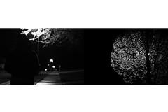 Day Two Hundred Five (fotoJared) Tags: street light blackandwhite tree monochrome rain nikon diptych walk april 365 showers 365project fotojared