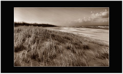 Windswept. (agphoto100) Tags: sea plant beach water monochrome grass clouds landscape mono blackwhite sand weeds nikon wind outdoor sandy windy blowing serene moire bending v1v