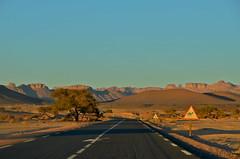 Djanet's road (Tahia Hourria) Tags: street sunset summer tree sahara montagne algeria soleil sand hiver dune sable nora algerie ait montain algrie tahia afrique dsert algiers sahel alger djanet aissa houria algrienne eldjazair djazair algriens hourria aitaissa atassa