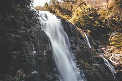 Wachirathan waterfall (ongthr) Tags: wild summer tree green nature water way thailand waterfall chiangmai