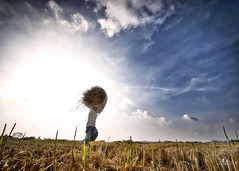 Field Work... (aestheticsguy2004) Tags: sky grass clouds plane landscape nikon skies ngc sunny land fieldwork hardwork sunnyday kanchipuram drygrass landscapephotography villagelady villagelandscape cloudsdrama manimangalam agriculturefield neeteshphotography villagefile nikond750tamron1530 tamronm1530