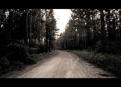 Ass Pen (hitmanfre1) Tags: road summer tree sepia forest aperture nikon southcarolina august creepy nationalforest charleston dirt dirtroad desolate gaussian nikond3200 2015 d3200 francismarion