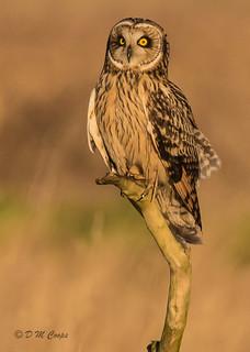 Owl Encounter