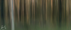 Panning in the forest Hunter Valley (sachman75) Tags: trees abstract color forest colours patterns australia nsw newsouthwales panning huntervalley eucalypts gumtrees nativeflora canon70200mmf28is hunterregion sonya7r woodlanecottages