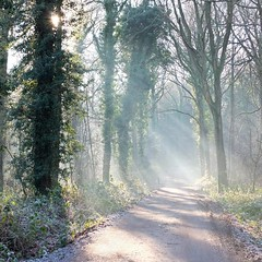 Beaming (Hilary Causer) Tags: trees winter sunlight nature woodland walking woods frost january herefordshire pathway sunbeams lowsun wintersun filteredlight queenswood dinmore