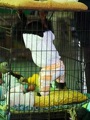 P1092370 (tatsuya.fukata) Tags: elephant thailand crocodile samutprakan crocodilefarm