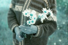 (vlΛиco iиvierиo) Tags: chile flowers grandma plant film analog 35mm lomo turquoise south m42 sur zenit margaritas turquesa