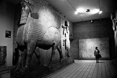 lamassu (sabrandt) Tags: england london statue museum europe unitedkingdom bull britishmuseum lamassu antiquities khorsabad humanheadedwingedbull asyrrian