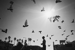 Mr. Larry and the birds. (Aria Aryana) Tags: leica summer portrait blackandwhite bw bird art 35mm homeless documentary summilux homelessness flyingbird leicam leicam240