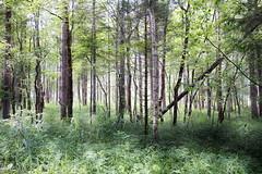 """Auenwald (i.e. """"Riverside Woodland"""") (winkler.roger) Tags: landscape austria mellau vorarlberg bregenzerwald mellental"""