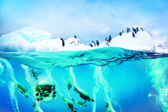 DM1N7C (TheLuxuryCruiseCo) Tags: cruise ice water berg photography penguin gentoo underwater under over antarctica line half iceberg papua luxury percentage chinstrap pygoscelis buoyancy
