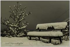 Snowy bench (AmaiaArzamendi) Tags: winter naturaleza snow storm tree nature canon bench arbol 50mm nieve banco natura tormenta invierno euskalherria basquecountry bucolic elurra zuhaitza oati arantzazu gipuzkoa pasvasco bucolico negua ekaitza debagoiena canonistas