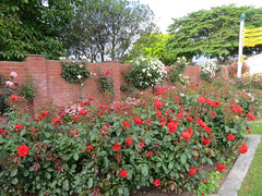 Woodville Rose Garden