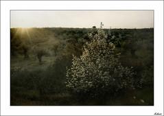 Maana volver a verte (V- strom) Tags: naturaleza textura luz sol nikon paisaje amarillo ocaso olivo