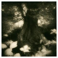 New project (Ivan B Palli) Tags: trees rollei edinburgh kodak 80s lith corstorphinehill bromesko