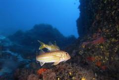EUO  OCEANA Carlos Surez 06612 (Oceana in Europe) Tags: spain formentera esp oceana islasbaleares obrasociallacaixa expedition2006 expedicion2006