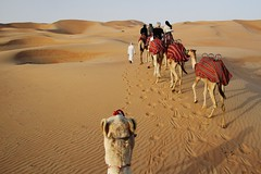 Camelcam (sonofwalrus) Tags: slr canon sand desert dunes uae camels  theemptyquarter eos7d