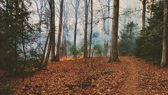 The ones you are most honest with will accuse you of the most deceit, because they want to be proven wrong. (SaltyDogPhoto) Tags: trees mountains nature leaves forest fire photography woods path smoke samsung trail burn mtb forestfire photooftheday swatarastatepark flickrsbest capturedmoment mtbtrail samsungs6 saltydogphoto
