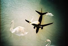 Lomo  unflappable (lomomowlem) Tags: travel bird film silhouette plane river swan lomo lca xpro lomography xprocess doubleexposure crossprocess aircraft flight jet lofi multipleexposure analogue vignette expiredfilm kodakelitechrome ebx