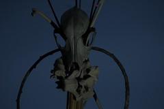The ritual (Braindead zu) Tags: sardegna canon eos skull sardinian cult stick ritual anima cranium mighty mystic mundi rituale uroboro cvlt scafander 1200d