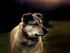 Vndor - kutyaportr (Van'elise) Tags: kutya llat portr fot