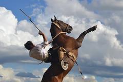 Sauce, Corrientes, Argentina (Eduardo Amorim) Tags: horses horse southamerica argentina caballo cheval caballos sauce cavalos corrientes pferde cavalli cavallo cavalo gauchos pferd chevaux gaucho amricadosul gacho amriquedusud  gachos  basto sudamrica suramrica amricadelsur sdamerika jineteada  americadelsud gineteada americameridionale eduardoamorim corrientesprovince provnciadecorrientes bastoconencimera bastoaberto cavall
