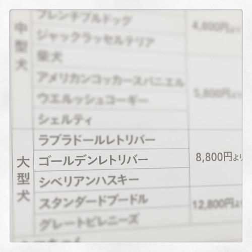 ゴールデンのシャンプー8,800円、 人間より高い。
