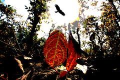 the anthroplogy of spring (bimboo.babul) Tags: trees flower nature forest season nationalpark scenery lakes national naturalbeauty floraandfauna touristplace leafandlight visitingpkace