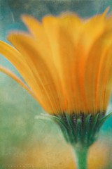 Textured Flower (zaid.sp14) Tags: flower lens 50mm nikon 14 inverse textured d610